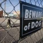 Dog Bite Beware Of Dog Sign