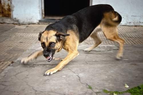 Dog Bite Lawyer in Galveston, TX